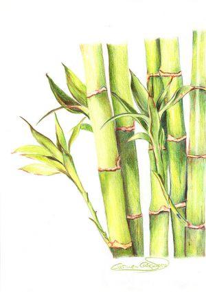 BAMBÚ - Papel lápiz color - 21x30cm