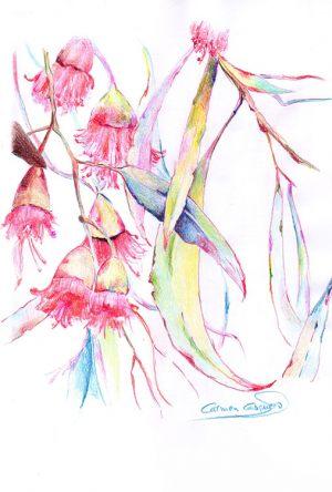 EUCALIPTO MEDITERRÁNEO - Papel lápices color - 21x30cm