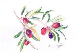 OLIVAS - Papel lápiz color - 21x30cm