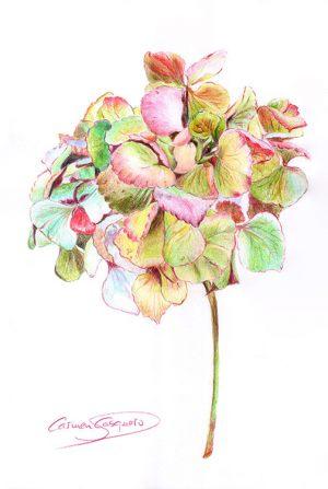 HORTENSIA ROSA - Papel lápices color - 21x30cm