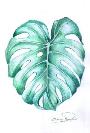 COSTILLA DE ADÁN - Papel lápiz color - 21x30cm