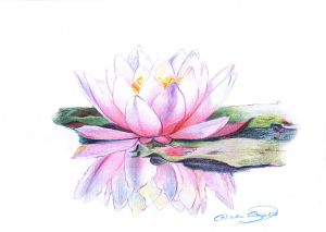 NENUFAR - Papel lápiz color - 30x21cm