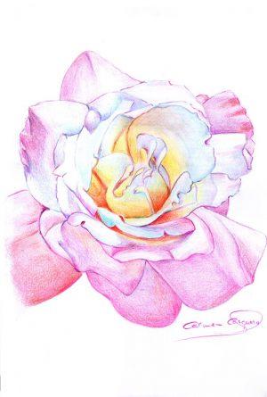 ROSA - Papel lápiz color - 21x30cm