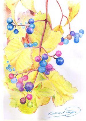 SEMILLAS - Papel lápiz color - 21x30cm