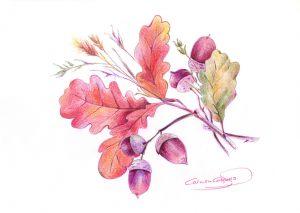 BELLOTAS - Papel lápiz color - 21x30cm