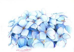 HORTENSIAS - Papel lápices color - 30x21cm