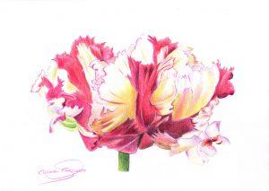 TULIPÁN - Papel lápiz color - 30x21cm