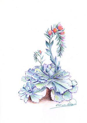 CACTUS EN FLOR - Papel lápiz color - 21x30cm