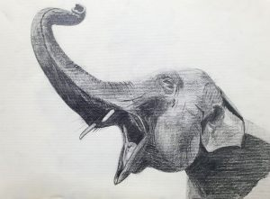 GRUÑIDO - Papel lápiz - 32x23cm